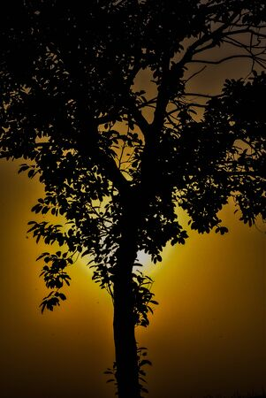 Sunset is a beautiful side of the earth. I am really happy to capture this picture. Banco de Imagens
