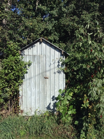 Old shed in a bush on a farm