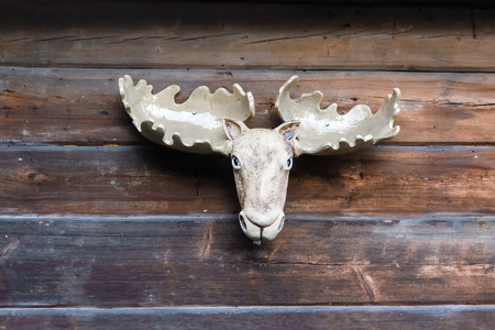 Trophy hunting. Skull with horns photo