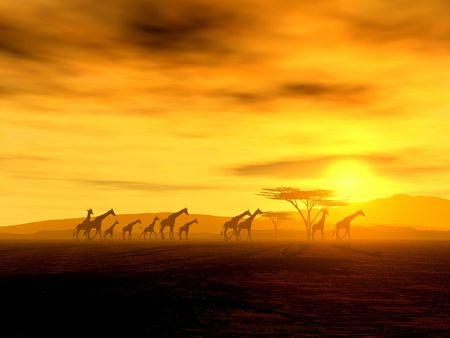 wildlife: Illustration of an african wildlife scenery