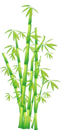 Illustration of a chinese bamboo Stock Photo