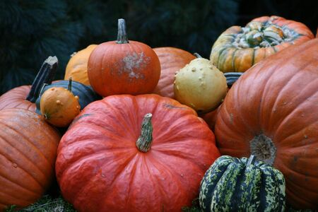 Image of some  very beautiful colored pumpkins