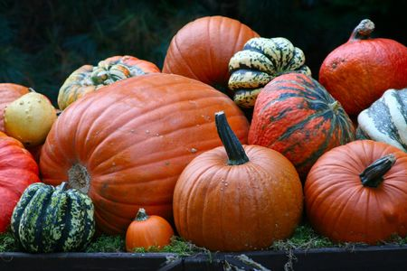 image of different colorful pumkins