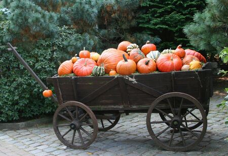 image of different pumpkins on an vintage wagon