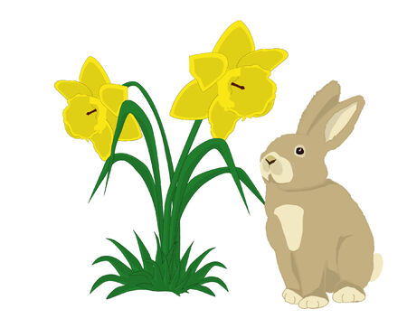 Illustration of a cute bunny with two daffodils on white background