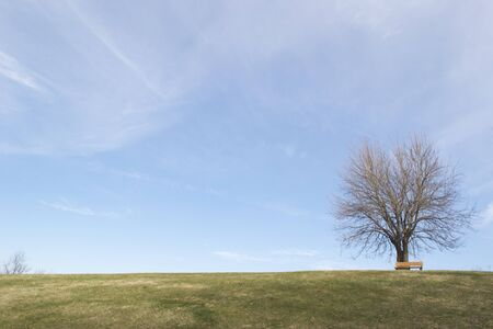 A lone tree on a hill with blue sky and fall grass