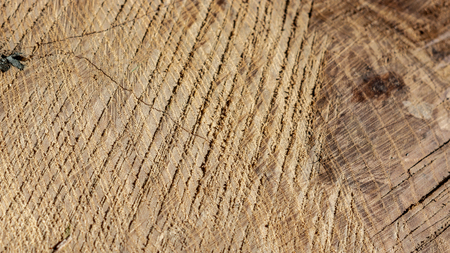 the texture of chopped wood closeup sunny day