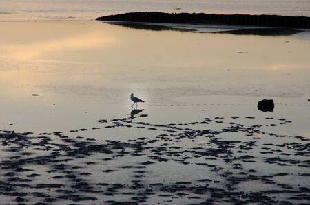 vogelspuren: Vogel im Watt