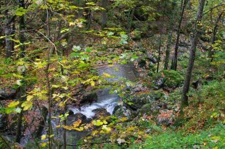 in bavaria: a woodland walk in bavaria