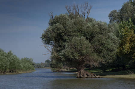 southeast europe: Big Tree in the Danube Stock Photo