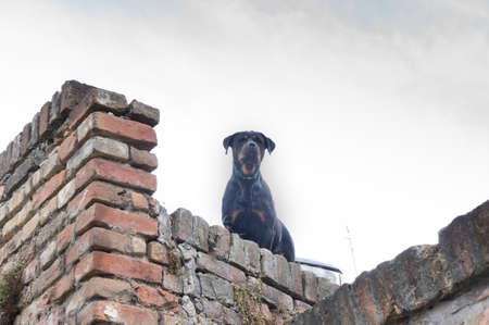 southeast europe: watchdog on a bricks wall