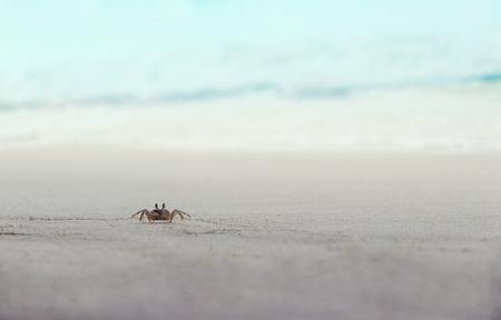 crab crawling on the beach near the ocean