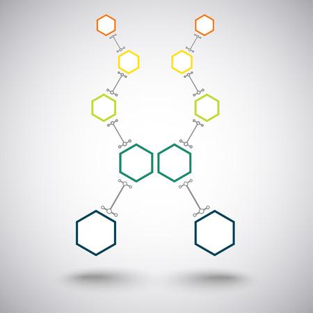 mediateur: Concept de la communication, deux succursales de cinq cellules connect�es en couleur. Vector Graphics Illustration