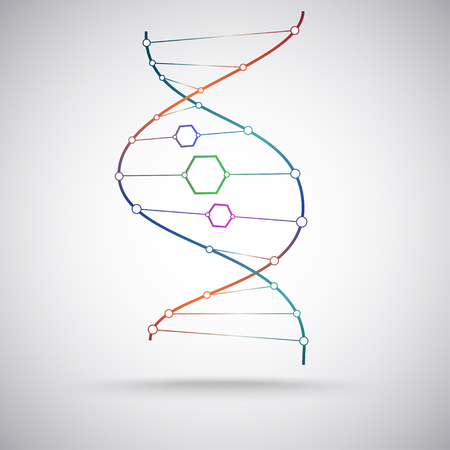 deoxyribonucleic acid: model of the DNA molecule. Vector Graphics