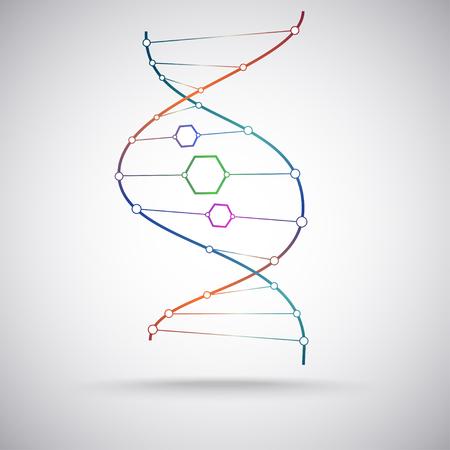model of the DNA molecule. Vector Graphics