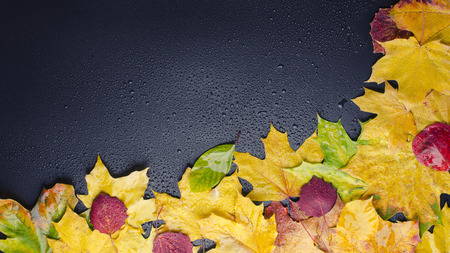wet leaves yellow red green lies on black background right Stock Photo