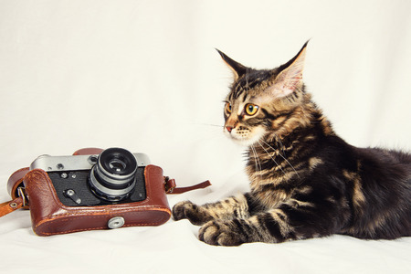 pet photography: kitten lying on a white background with an old camera