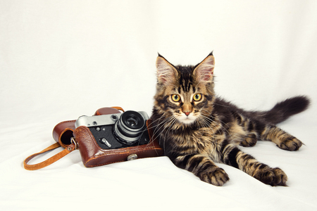 kitten lying on a white background with an old camera
