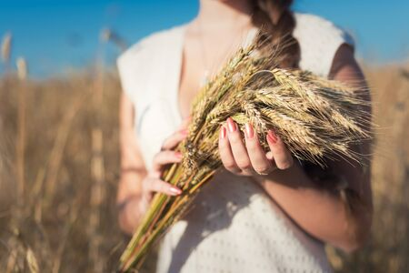Girl with ears of wheat standing in a wheat field. Close-up of hands