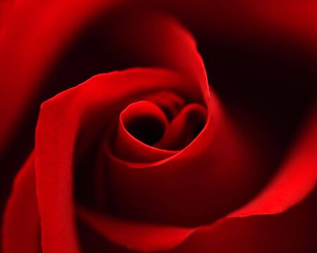 Red rose with symbol in center. close-up #1 Stock Photo - 782599
