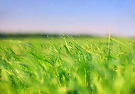 Earth & sky: grass photo