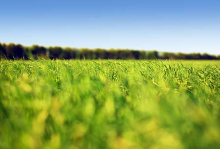 Grass and sky #1 Stock Photo - 959545