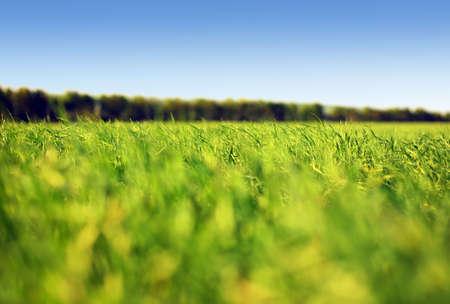 Grass and sky #1