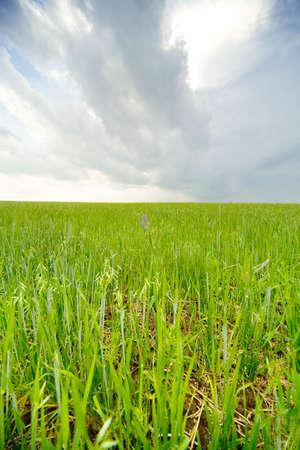 Earth & sky: grass #3 Stock Photo - 1078553