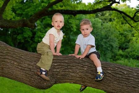 Two little boys sitting on the oaks branch photo
