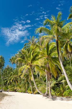 koh: Tailandia. Palmeras en la playa de soledad en isla de Koh Kood
