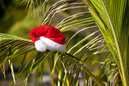 Red Santas hat hanging on palm tree at the tropical beach. Christmas in tropical climate concept photo