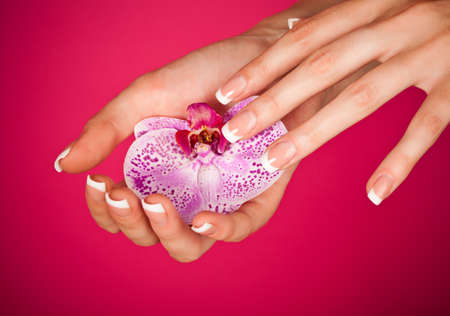 nail care: Human fingers with classic french-style manicure touching orchid over pink background