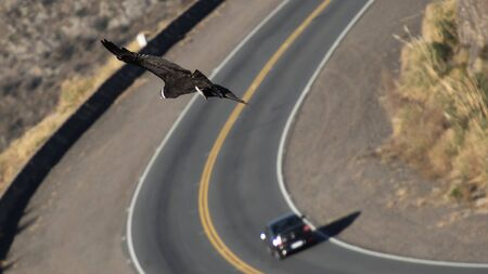 A condor taken a curve on the road next to a car, taken from above. 스톡 콘텐츠