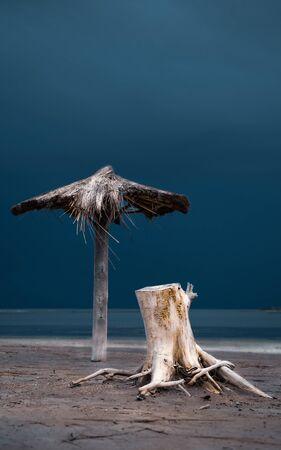Straw umbrella and dead tree Stock fotó