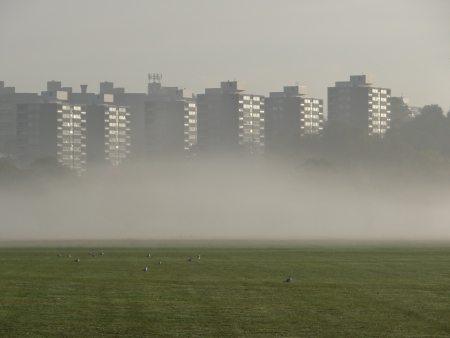Blocks by misty Richmond Park