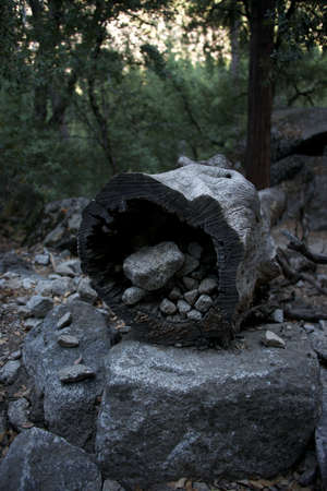 Hollow log filled with stones