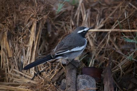 white bird: Black and white bird on ground Stock Photo