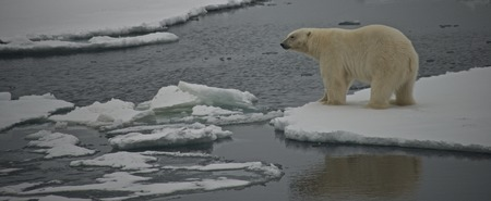 Polar bear staring over water in Arctic