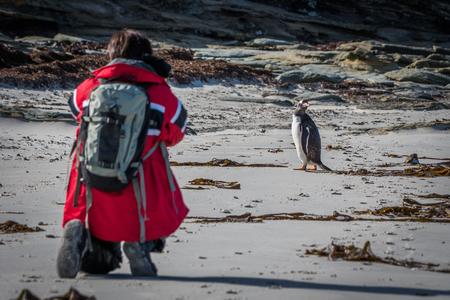 gentoo: Photographer shooting gentoo penguin on sandy beach