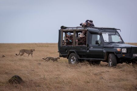 Cheetah and cub pass photographers in truck Stock Photo