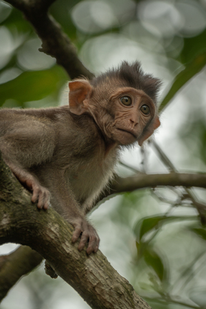 Close-up of baby long-tailed macaque on branch