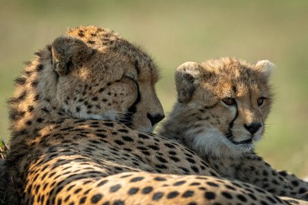 Close-up of cheetah lying asleep by cub Archivio Fotografico