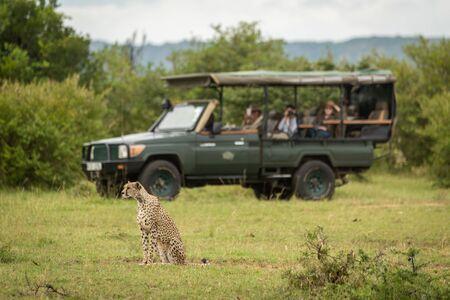 Tourists in truck watch cheetah on grass Reklamní fotografie