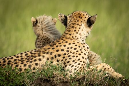 Cheetah and cub on mound facing away Stock Photo