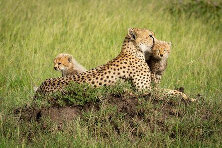 Cubs sit beside mother on termite mound Reklamní fotografie