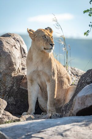 Lioness sits among rocky boulders looking right