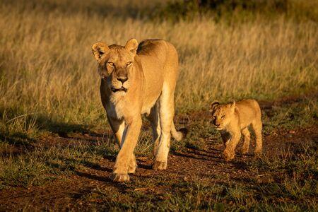 Lioness walks along track followed by cub Standard-Bild - 140095169