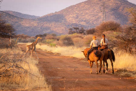 Two women riders watch giraffe cross track
