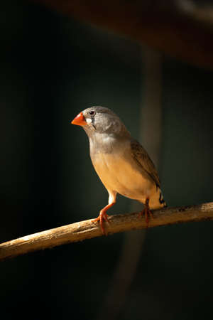 Zebra finch on sunlit branch with catchlight