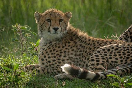 Close-up of lion cub sitting facing left